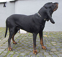 200px-Black_and_Tan_Coonhound